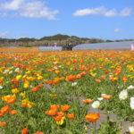 館山市布沼 花と緑と海を楽しむ別荘地