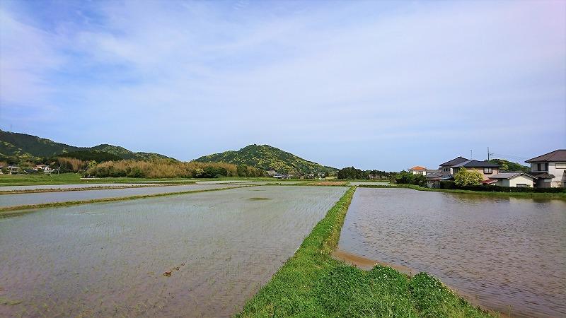 新緑の季節と鴨川富士