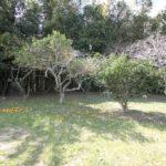 敷地内の果樹